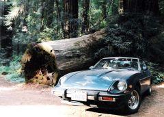 Giant Tree, Small Car