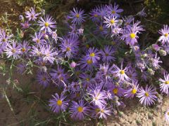 New Mexico Flowers