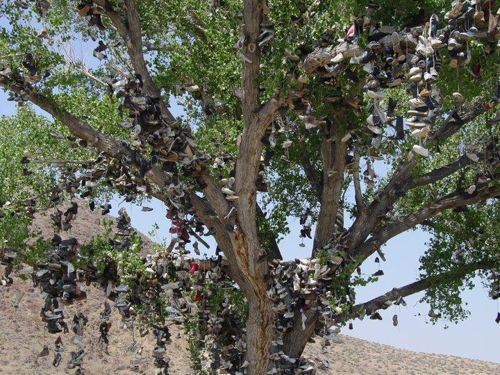 Fallen Shoe Tree