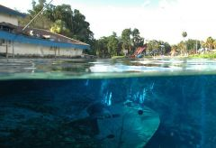 Split view of Weeki Wachee Springs