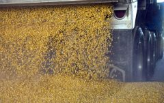 Corn being dumped at Caro, MI POET ethanol plant