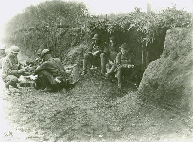 US Military homing pigeons WWI