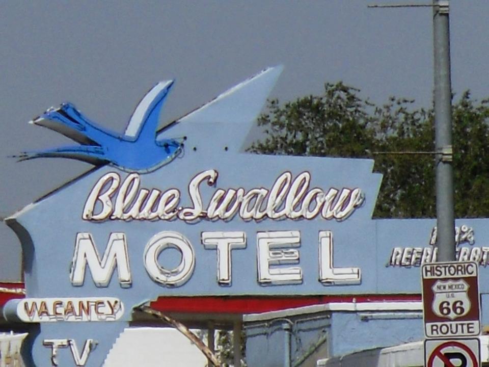Blue Swallow in daylight