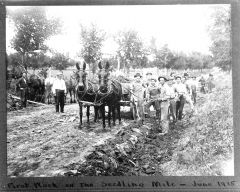 first work seedling mile June 1915