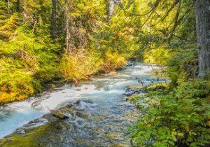 McKenzie River by Sally McAleer