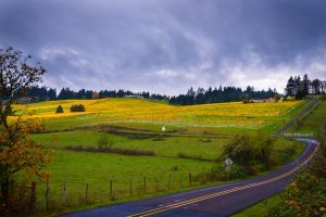 wine country briggs hill fall by melanie griffin